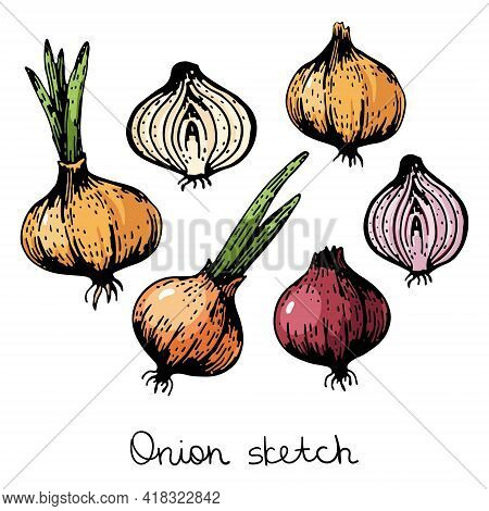 Vector Set Of Onion Vegetable. Red And Orange Onions, Half And Whole. Isolated On A White Background