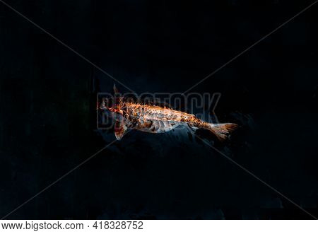 Koi Fish Or Koi Carp Swimming Inside The Fish Pond Background, Japanese Fish Species, Many Colorful