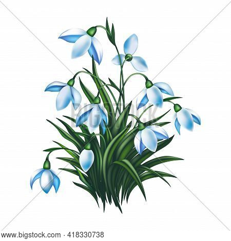 Illustration Of Beautiful Spring Snowdrop Flowers Isolated
