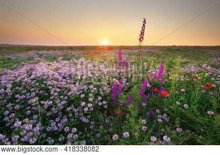 Spring flower in meadow at sunrise. Landscape nature composition.