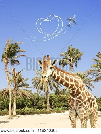Vacation concept. Giraffe, palms, aircraft draw a heart in the sky. Flight route of aircraft in shape of a heart.