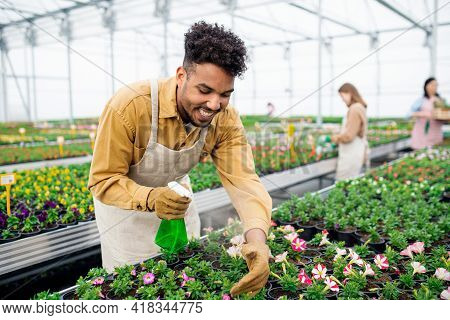 Young African-american Man Working In Greenhouse In Garden Center.
