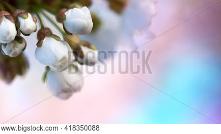 Natural Blurred Background. Spring Time. Spring Cherry Flowers Background. Spring Season. Gentle Def