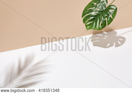 Side view green tropical palm leaf. Still life with sunlight and harsh shadow. White empty table and beige wall. Minimal summer concept with monstera palm leaf and shadow. Beige wall background
