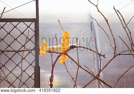Yellow Plane Toy Fell And Stuck On The Vines. Spring Time.