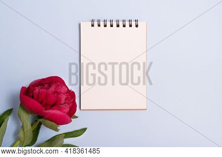 Blank Notepad Sheet And Burgundy Peony Flat Lay On A Blue Background. Summer Concept With Meta For T