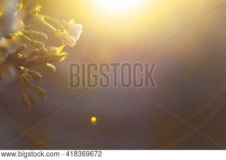 Blurred Background With Natural Sun Flare. Abstract Blurred Background. Abstract Blur Morning Light