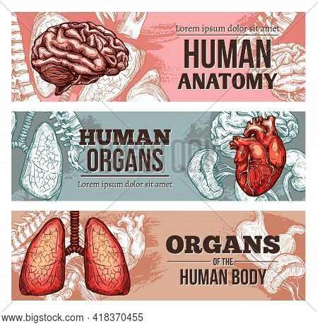 Human Body Organ Banners With Sketch Brain, Lungs, Spine And Heart With Kidneys. Vector Hand Drawn A