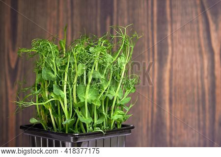 Micro-green Plant Sprouts On A Wooden Background. Micro-green Peas. Assortment Of Micro-greenery. Ve