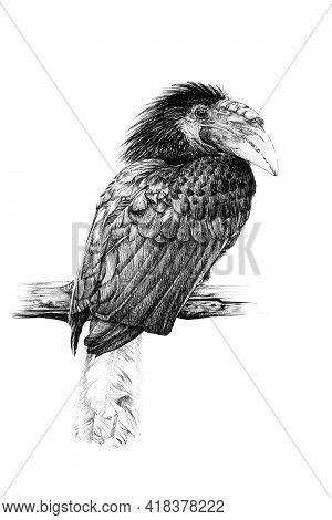 Hand Drawn Tucan, Sketch Graphics Monochrome Illustration On White Background (originals, No Tracing