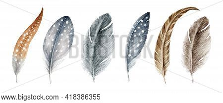 Feather Watercolor Illustration Set. Bird Quill And Down Hand Drawn Realistic Collection. Grey And B