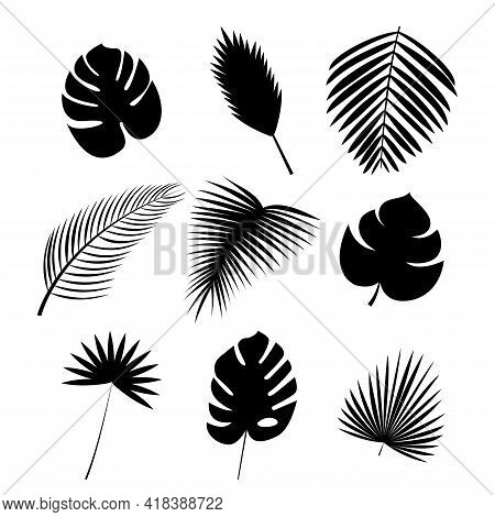 Black silhouettes of palm leaf Icon set Vector illustration of different exotic lush foliage isolated on white background