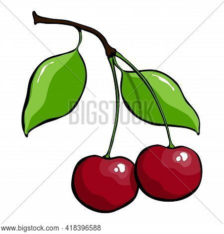 Drawn Cherry Ripe Fruit. Drawn Ripe Cherry With Leaf On A White Background. Vector Illustration.