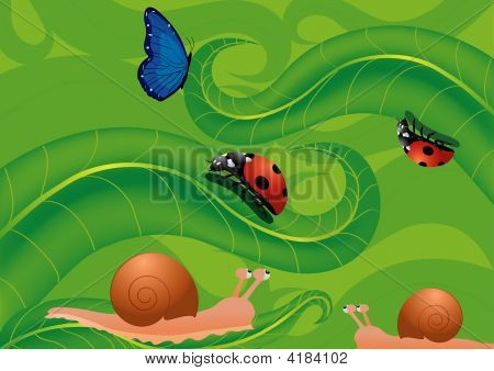 Ladybirds Snails And Butterfly In The Green Grass