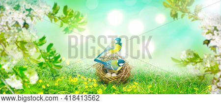 Great Tit Sitting On A Nest In Spring Weather
