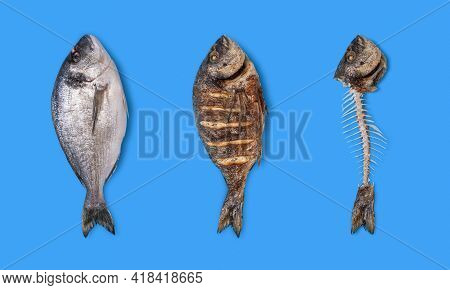 Dorado Fish Raw, Cooked And Only Bones Top View Isolated On A Blue Background. Collage With A Dorado