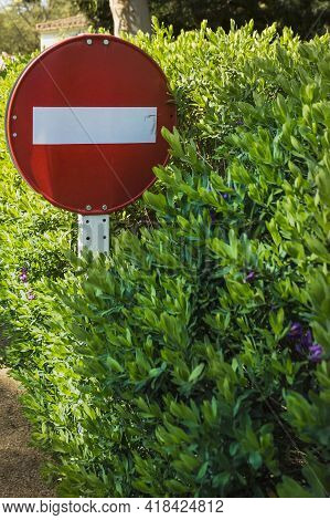 No Entry Or Do Not Enter Traffic Sign Overgrown In Green Flowering Hedge. Road Sign Trapped In Bush.