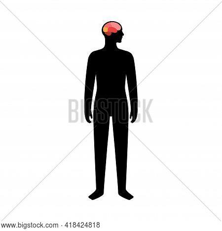 Brain In Male Body For Neurology Clinic. Occipital, Frontal, Parietal And Temporal Lobe. Intellectua