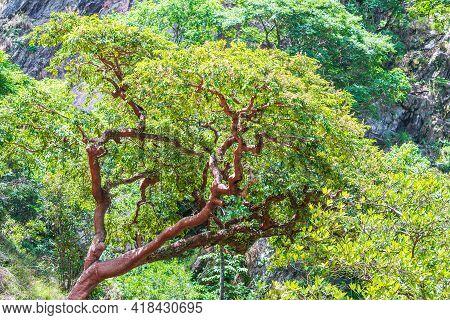 Landscape Of A Tree And Vegetation Of The Brazilian Cerrado Mineiro Of Minas Gerais State.