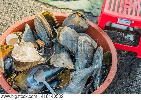 Large Mollusk Shell Discarded In Plastic Tub At Dockside Market.