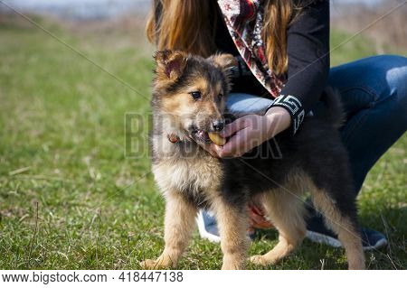 Woman Feeding Cute Puppy Dog From The Hand. Black-red Dog. Little Puppy, On A Leash. Beautiful Dog,