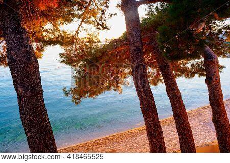 View Of Thepines Next To The Beach At Sunset, Stara Baska, Krk. Croatia