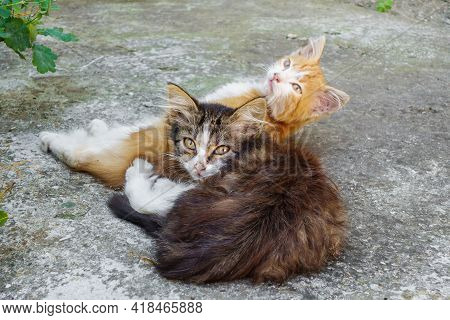 Two Young Kitten Relaxing In Plant Shadow In Summer Noon. One Is Orange, Another Is Brown. Look Expr