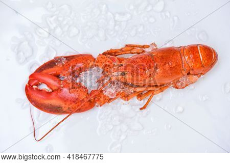 Fresh Lobster Food On White Plate Background, Red Lobster Dinner Seafood On Ice In The Restaurant Go