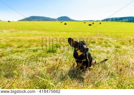Small Adopted Dog On Open Air Meadow In Countryside. Rural Natural Landscape, Horizontal Photo