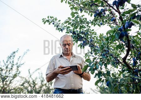 Agronomist Using A Tablet Pc, Bottom View On Modern Farmer With Digital Tablet, Farmers And Technolo