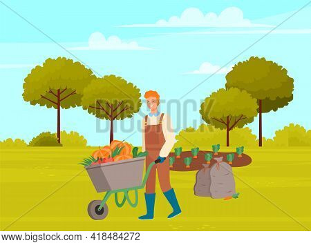 Farmer Wearing In Overalls And Rubber Boots Pushing Wheelbarrow Full Of Vegetables. Agricultural Mal