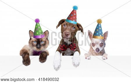 studio shot of two dogs and a kitten wearing party hats on an isolated background