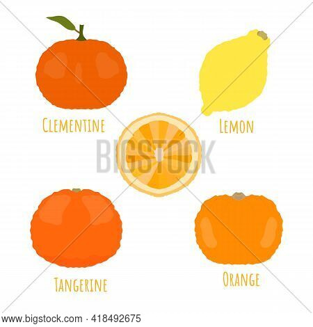 Sweet Yellow Whole And Half Cutted Citrus Fruits Isolated And Made In Flat Style. No Outlined Symmet