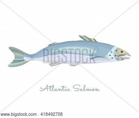 One Isolated Salmon Fish Made In Flat Style. Colored Salmon Without Outlines, With Light Glare And S