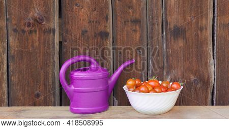 Harvest Red Tomatoes In White Bowl Next Pink Watering Can. Gardening Fresh And Juicy Vegetables From