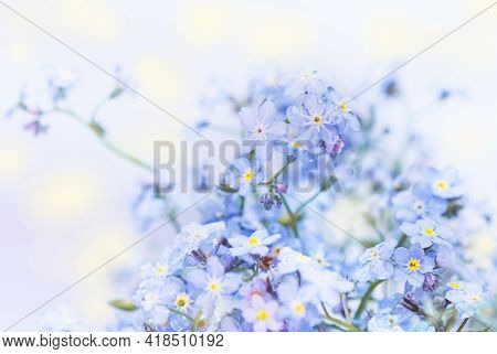 Real Charming Delicate Blue Flowers Of Spring Forget-me-nots For Good Mood