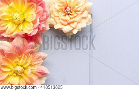 Flowers Composition. Dahlias Flowers On White Background. Valentines Day, Mother Day, Womens Day, Sp