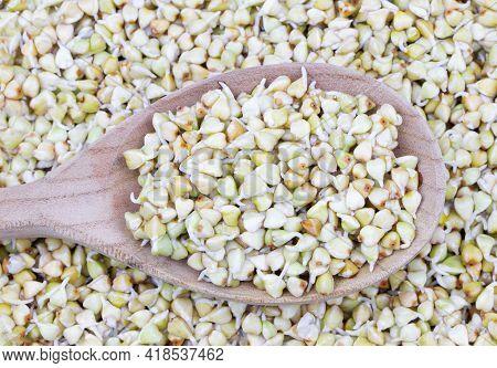 Sprouted Buckwheat Seeds In Wooden Spoon. Healthy Vegan Food. Vegetarian Food. Nature Vitamins.super