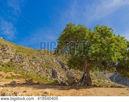 Landscape With Green Tree On Rocky Hill Against Blue Sky. Bright Summer Background. Old Tree With A