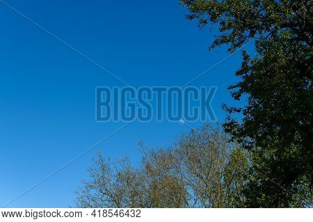 Blue Sky With Vegetation And Moon. Frame With Foliage And Branching And Copy Space.