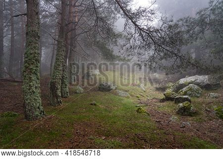 Mysterious Enchanted Forest Landscape, Clearing In The Forest With Light Coming From The Sky. Morcue