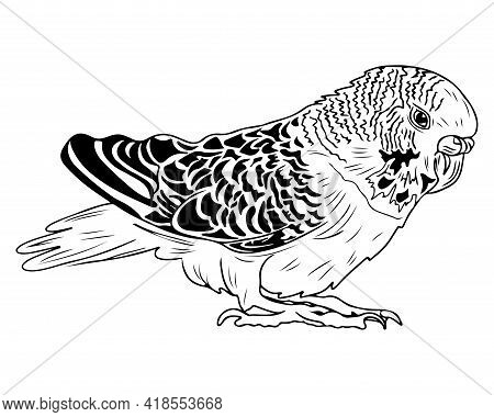 Line Parrot Isolated On White Background. Parrot For Coloring Book Or Page. Vector Parrot.