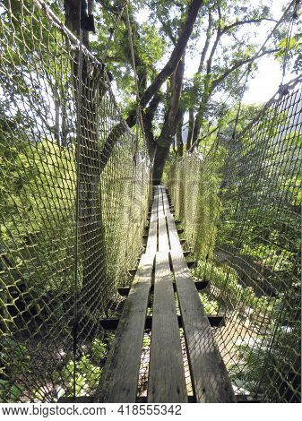 Suspension Bridge In Tropical Garden Of The French West Indies. Suspended Walkway Over Lush Caribbea