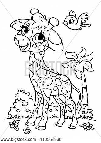 Giraffe Little Kid Coloring Book. Black And White Outline. Zoo. Animals Of Africa. Illustration For