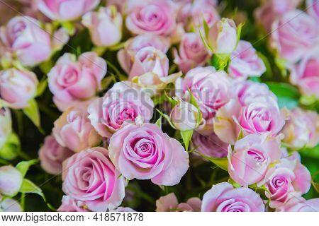 Colorful Beautiful Flowers Bouquet - Roses At Studio, Flower Shop - Close Up View. Floristry, Romant