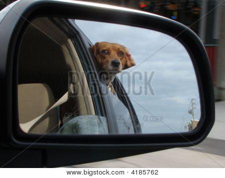 Looking Thru Car Window