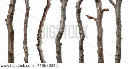 Collection walnut branches isolated on white background, including clipping path