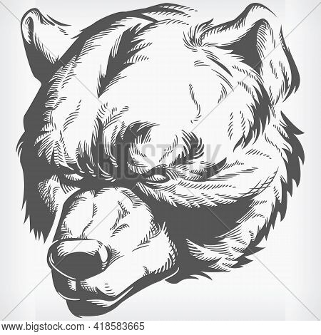 Silhouette Brown Grizzly Bear Head Stencil Front View Vector Drawing