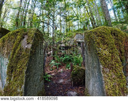 Old Abandoned Concrete Constructions Covered With Moss In The Forest Area Of Tod Inlet In Victoria B