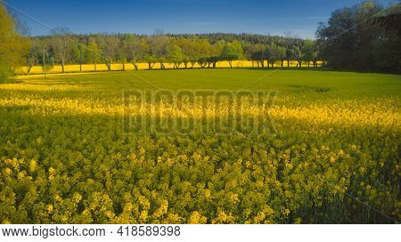 Stockholm Ekero - Aerial View Of A Rapeseed Field 20-04-01. High Quality 4k Footage